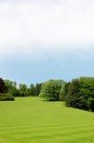 Grünes Gras und Bäume stockfoto