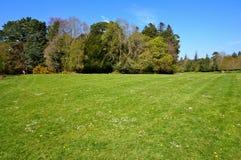 grünes Gras und Bäume auf Hintergrund Lizenzfreie Stockfotografie