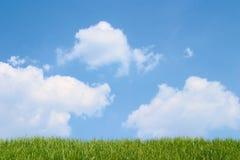 Grünes Gras und bewölkter blauer Himmel Stockbilder