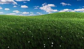 Grünes Gras und bewölkter Himmel Stockfotos