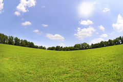 Grünes Gras und blaue Himmel in der Sommerzeit Stockfotografie