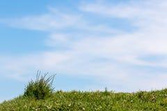 Grünes Gras und blauer bewölkter Himmel stockbild