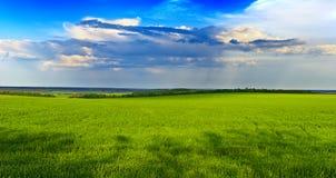 Grünes Gras und blauer Himmel lizenzfreies stockbild