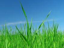 Grünes Gras und blauer Himmel. Stockbilder