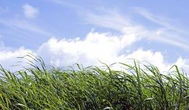 Grünes Gras und blauer Himmel Stockbilder