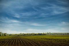 grünes Gras und blauer Himmel Stockfotografie