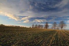 grünes Gras und blauer Himmel Lizenzfreie Stockfotos