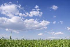 Grünes Gras und blauer Himmel Lizenzfreies Stockfoto