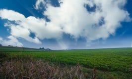 Grünes Gras und blauer Himmel Stockbild