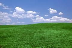 Grünes Gras und blauer Himmel backg Lizenzfreies Stockbild