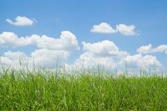 Grünes Gras und blauer Himmel mit Wolken lizenzfreie stockfotografie
