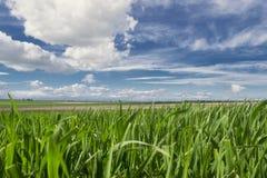 Grünes Gras und blauer Himmel mit Wolken Stockbild