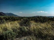 Grünes Gras und blaues sky& x27; s in Montana stockbilder