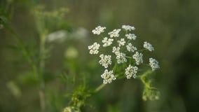 Grünes Gras und Blumen in der Sonne Lizenzfreie Stockfotos