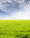 Grünes Gras und fleecy Wolken stockfoto