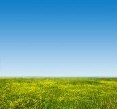 Grünes Gras und frische, junge Blumen auf Frühlingsfeld Stockfotografie
