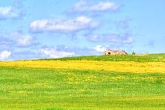 Grünes Gras und Gelbblumenweidelandschaft unter blauem Himmel und Wolken Stockfotos