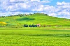 Grünes Gras und Gelbblumenweidelandschaft unter blauem Himmel und Wolken Lizenzfreie Stockfotos