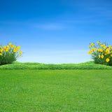 Grünes Gras und gelbe Blumen lizenzfreie stockfotos