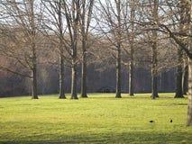 Grünes Gras und hohe Bäume Stockfoto