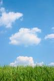 Grünes Gras und schöner blauer bewölkter Himmel. Lizenzfreies Stockfoto