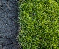 Grünes Gras und Schmutz Stockfoto