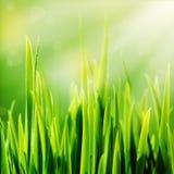 Grünes Gras und Sonne des neuen Frühlinges stockbilder