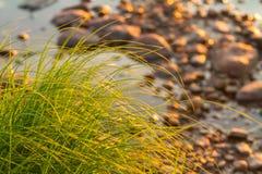 Grünes Gras und Steine Flusssegge nahe dem steinigen Ufer Lizenzfreie Stockfotos