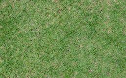 Grünes Gras und trockenes Gras stockbilder