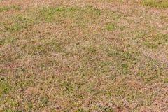 Grünes Gras und trockenes Gras Lizenzfreie Stockbilder
