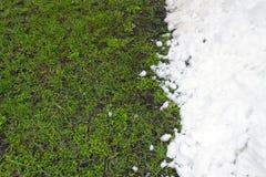 Grünes Gras und weißer Schnee Stockbild