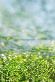Grünes Gras in unscharfem blauem Naturhintergrund Lizenzfreie Stockfotos