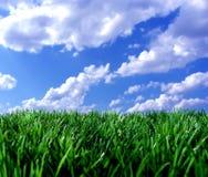 Grünes Gras unter blauem Himmel Stockfotos