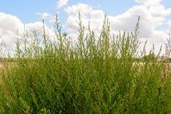 Grünes Gras unter blauem Himmel Stockbild