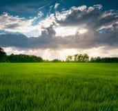Grünes Gras unter blauem Himmel mit weißen Wolken und Sonnenstrahlen Lizenzfreie Stockfotos