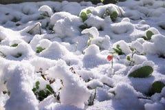 Grünes Gras unter dem Schnee Stockfotografie