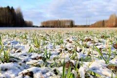 Grünes Gras unter dem Schnee Stockfotos