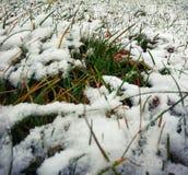 grünes Gras unter Schnee Lizenzfreies Stockbild