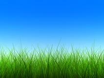 Grünes Gras verdünnen Stockfotografie