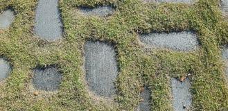 Grünes Gras wächst auf dem Felsenhintergrundfoto Beschaffenheit lizenzfreies stockbild