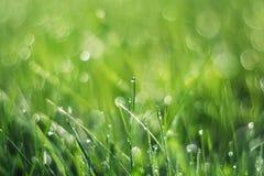 Grünes Gras wird mit glänzenden Tropfen des Morgentaus bedeckt Lizenzfreies Stockbild
