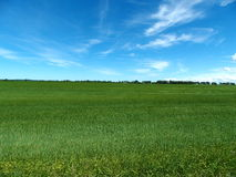 Grünes grasartiges Bauernhoffeld Stockfotografie