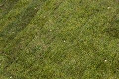 Grünes Grasschollegras lizenzfreies stockfoto