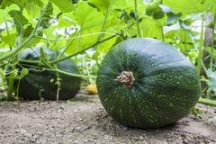 Grünes groud auf Bauernhof Lizenzfreie Stockfotos