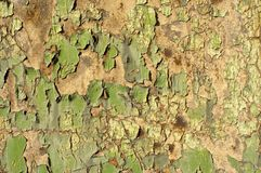 Grünes grunge lizenzfreie stockbilder