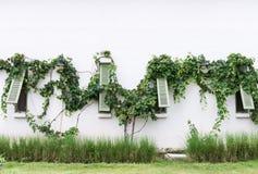 Grünes hölzernes Fenster mit der Weinrebe Stockfotos