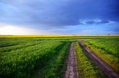 Grünes Hafer-Feld Lizenzfreies Stockbild