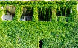 Grünes Haus in den Blättern Stockfoto