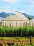 Grünes Haus für arganic Gemüseanlage in der sauberen Landwirtschaft ind Stockbild
