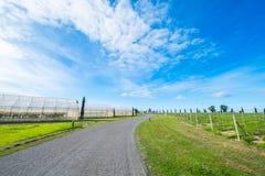 Grünes Haus für die Landwirtschaft und die Straße mit blauem Himmel in ländlichem Stockfoto